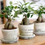お部屋に彩りを*オシャレで可愛い観葉植物インテリア
