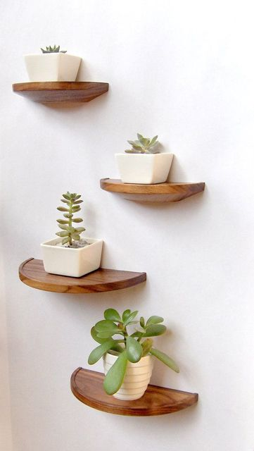 Half round walnut shelf - floating wood shelf | Shelves, Wood Shelves and Plants (2464)