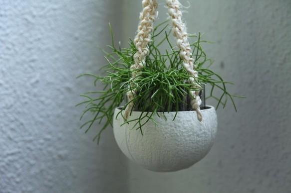 ココナツのプラントハンガー 150711|一輪挿し・花瓶・花器|ハンドメイド通販・販売のCreema (10081)
