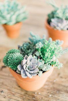 How to Make DIY Succulent Arrangements | サボテン、多肉植物、植物 (10904)