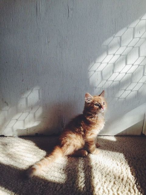 Evening light with Alvie. | photograph | Pinterest | 猫、子猫、照明 (11170)
