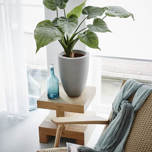 Capi Tutch #planter #interiordesign #plant #indoor #grey | Iconosquare (12353)