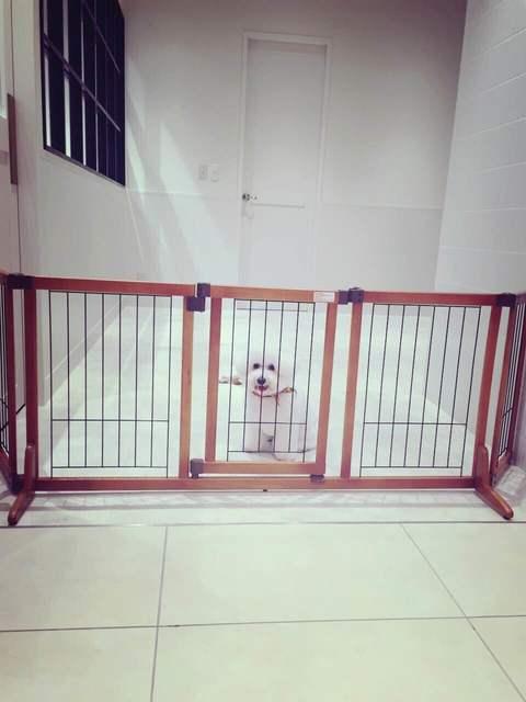 愛犬のエマ