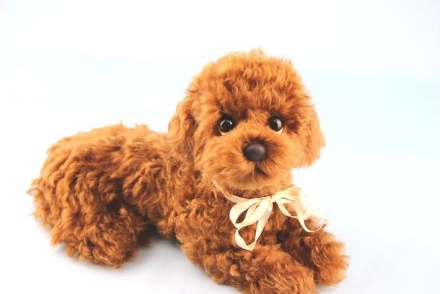 トイプードル  レッド ぬいぐるみ 犬 モヘア | ハンドメイドマーケット minne (16487)