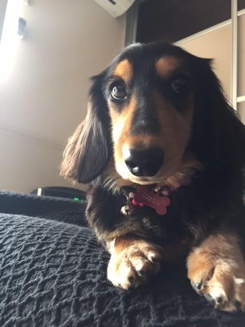 愛犬 Nico 3歳