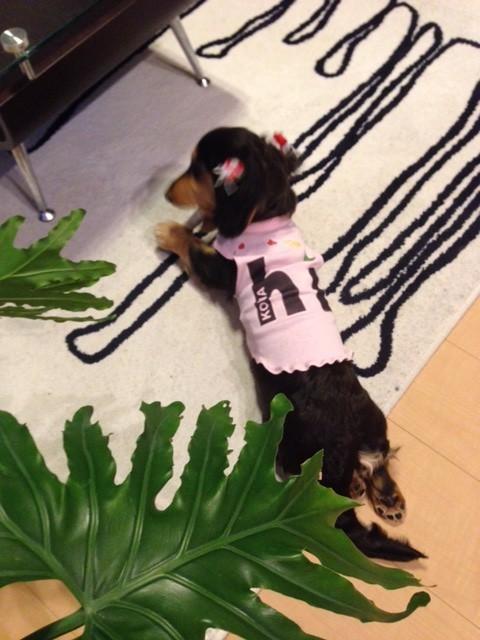 初めてのハンドメイド犬服