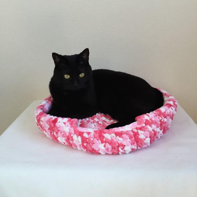チャリティ猫袋と拾った子猫ソルト
